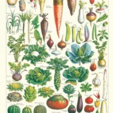 פוסטר/ נייר אריזה-ירקות