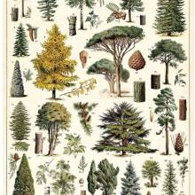 פוסטר/ נייר אריזה- עצים