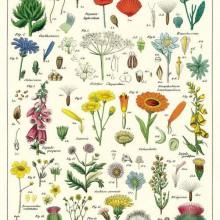 פוסטר/ נייר אריזה- פרחים WILDFLOWERS